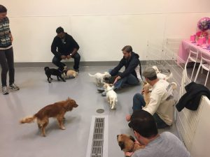 Santa Monica Bronto team volunteering at Found Animals Foundation